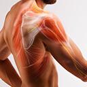 Namožení svalů ašlach